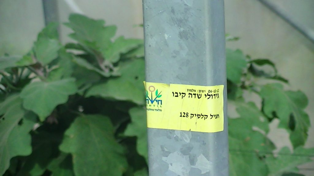 Hishtil signage at front of greenhouse growing aubergines in the illegal settlement of Almog