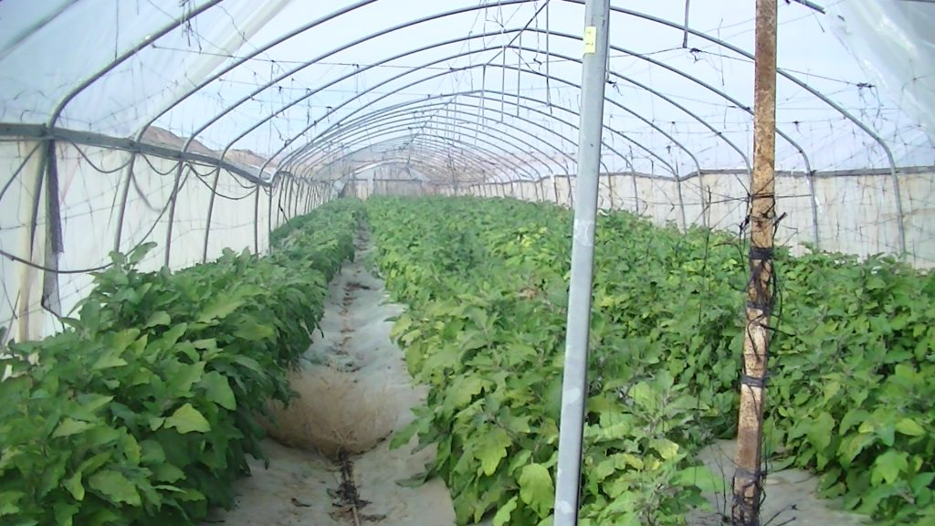 Hishtil signage on a greenhouse growing aubergines in the illegal settlement of Almog
