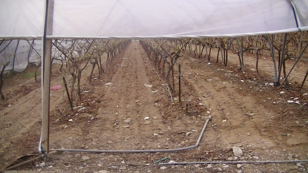 Greenhouses in Almog's agricultural fields, Photo: Corporate Watch, February 2013