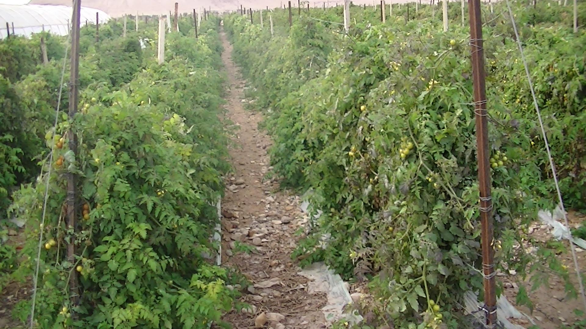 The fields of Beit Ha'Arava - photo taken by Corporate Watch, February 2013