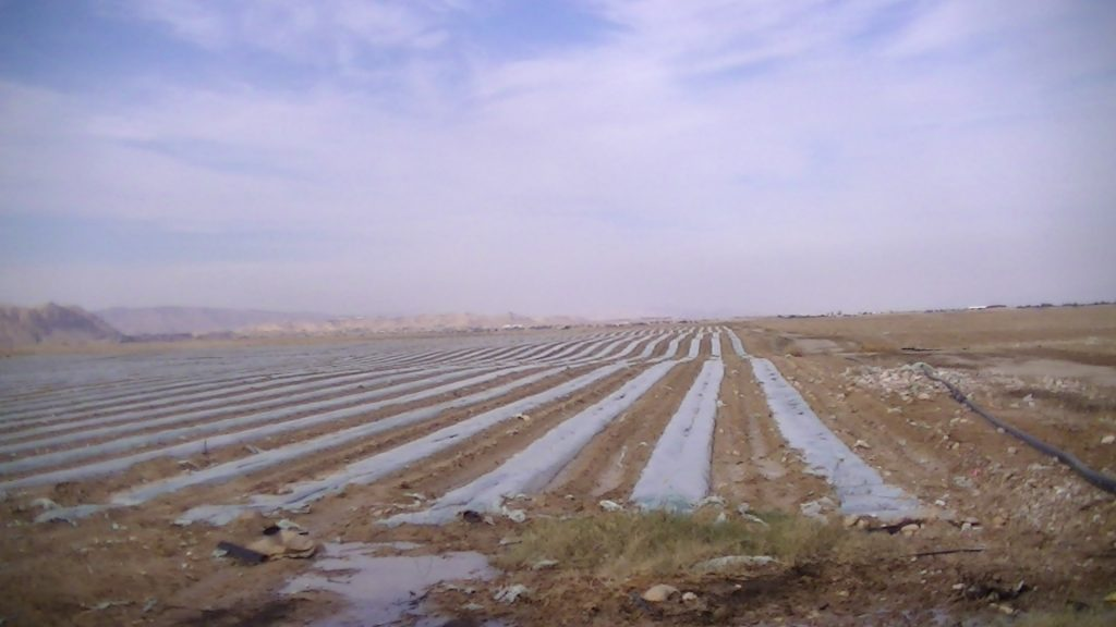 The fields of Beit Ha'Arava settlement, photo take by Corporate Watch, February 2013